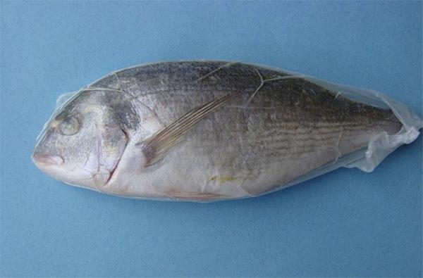 prodotti ittici congelati